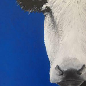 Blue Cow print